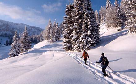 Neve & sci